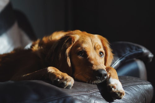 Image of a dog laying on a recliner.